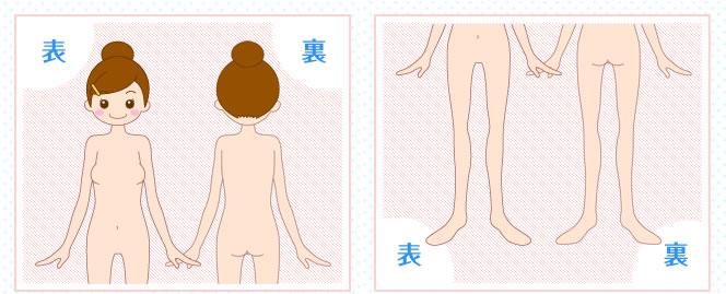 KIREIMO(キレイモ)の全身脱毛の範囲